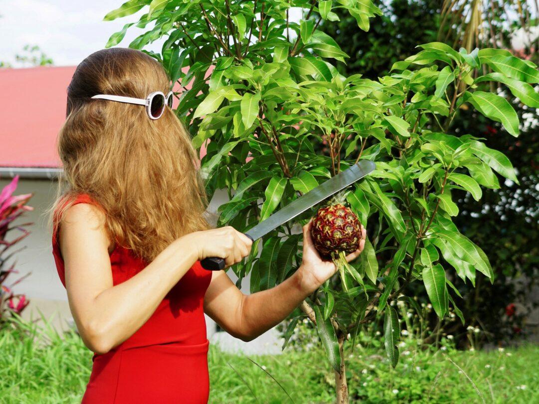 Choubaka dans une nature morte à l'ananas.