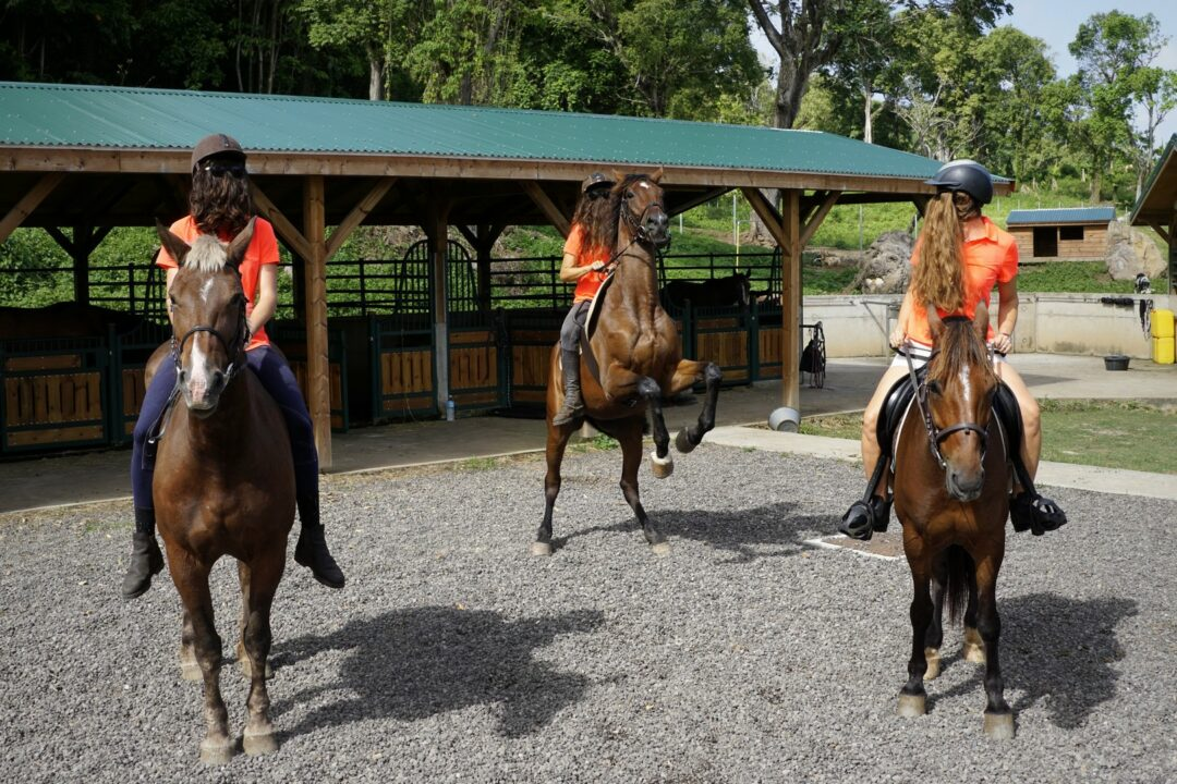 Choubaka fait du cheval