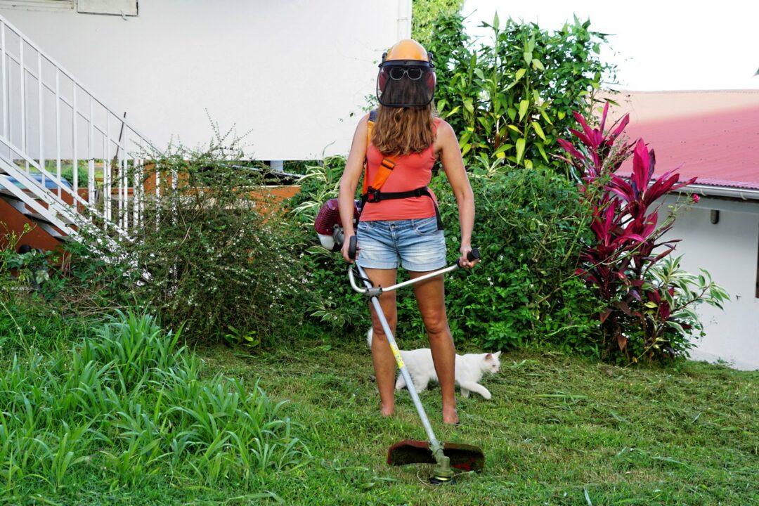 Choubaka tond la pelouse