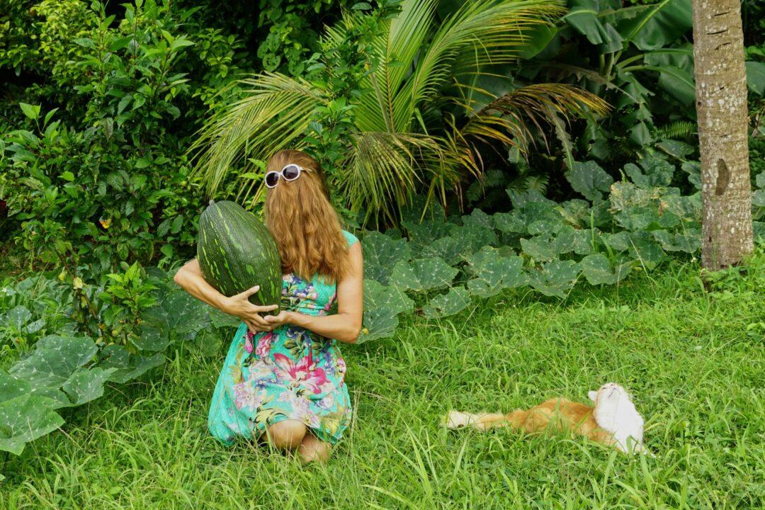 Choubaka récolte un giraumon