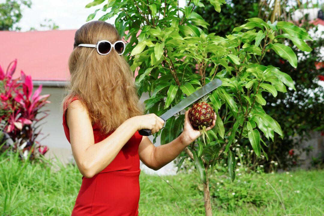 Choubaka cueille un ananas