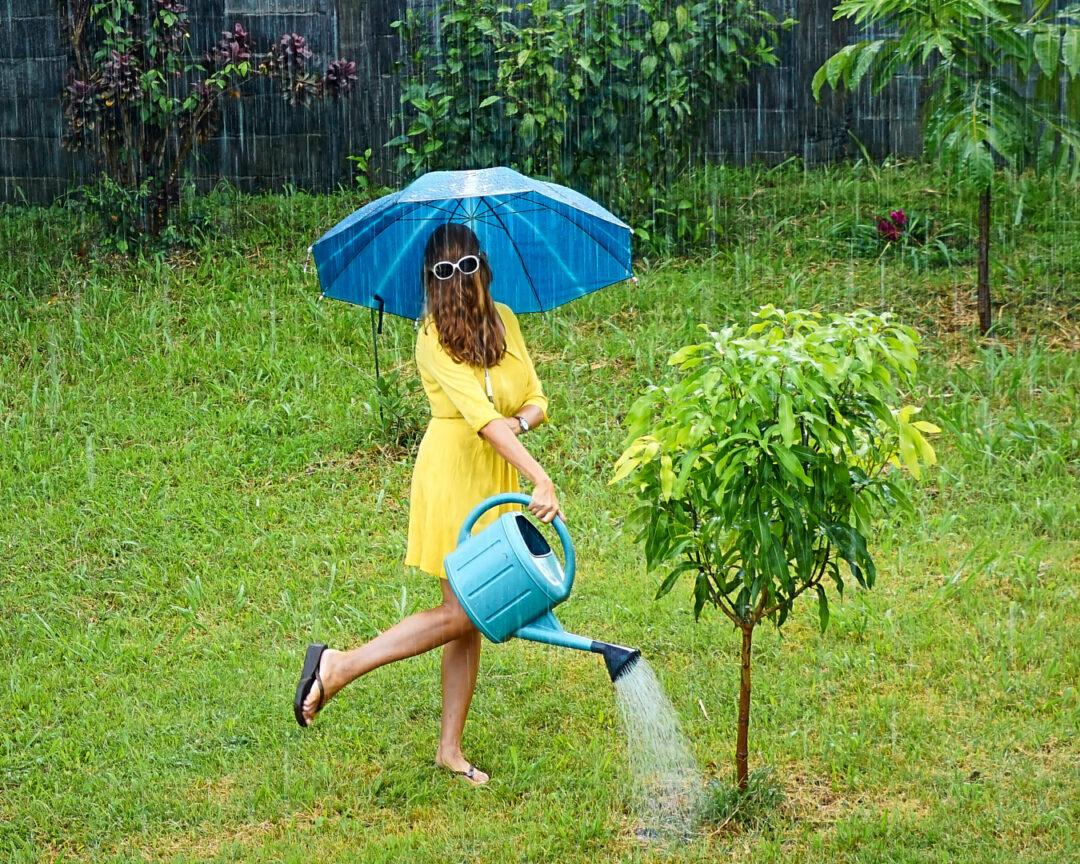 Choubaka arrose le jardin
