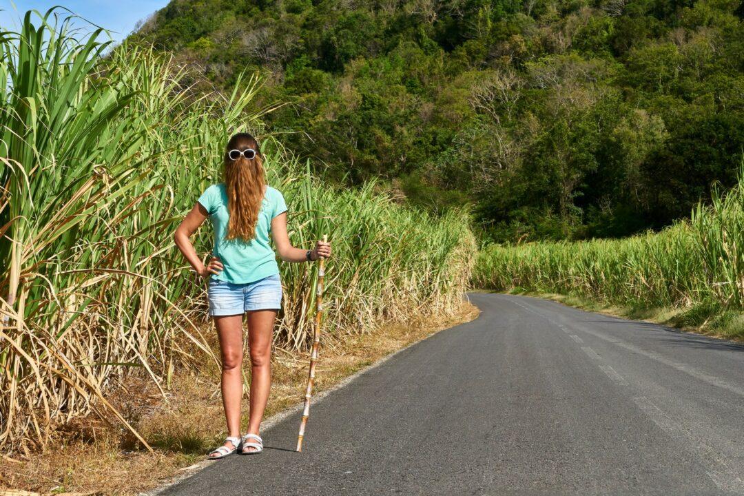 Choubaka sur les routes de campagne de Marie-Galante