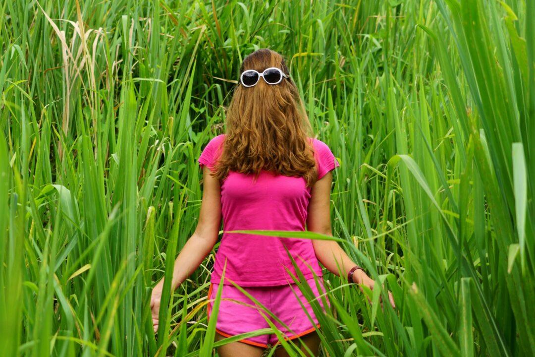 Choubaka dans les hautes herbes du sentier de la Grande Pointe