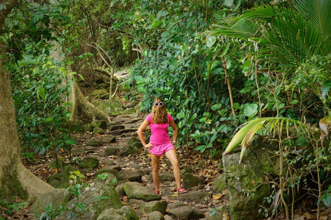 Choubaka dans la forêt mésophile du littoral