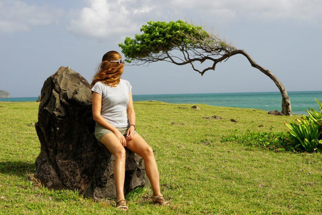 Choubaka à la Pointe Allègre, au septentrion de l'île de Basse-Terre